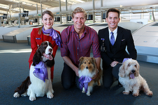 Aircraft Virgin Australia pets FF points