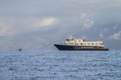Whales nearby the 36-guest Safari Explorer
