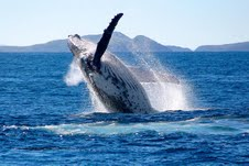 Whale-watching off Port Stephens