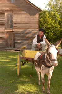 Belgenny Farm horse and cart