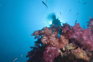 Coral care: Zeavola has several ongoing sustainability projects to ensure that environmentally friendly diving practices are used throughout the popular diving spots around Koh Phi Phi.