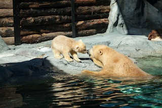 Meet our new cub at Sea World