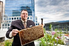 The Fairmont Waterfront, Vancouver - Bees