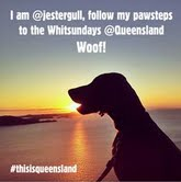 Queensland's official Instagram has gone to the dogs, well just one dog