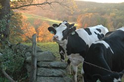 Get out and explore the beautiful colors of New England fall foliage at farm tours with The Farmer's Cow.