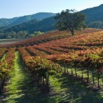 THE TRAVEL PASO ROBLES ALLIANCE VINEYARD