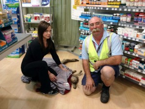 Wildlife Victoria volunteers Ella Roundtree and Geoffrey Fuller with the captured kangaroo in the airport's pharmacy. Photo by Wildlife Victoria