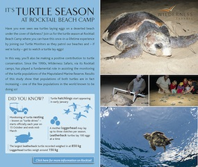 Wilderness Turtle Season