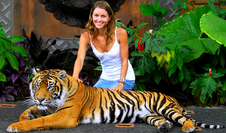 Was this the tiger? One relaxes with a visitor on the Zoo's website