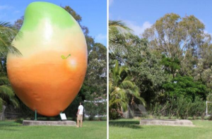 Before and after - Twitterpic of missing mango