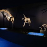 DGT - Whale skeleton and fossils ANMM Feb 2014