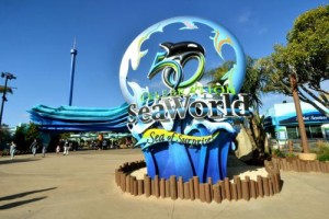 SEAWORLD PARKS & ENTERTAINMENT ICON