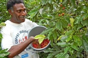 Johnny Willie, Tanna coffee grower