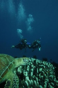 Passions divers