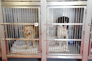 Ship QM2 dogs in kennels