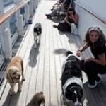 Ship QM2 dogs with owners on deck