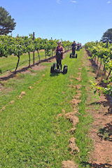 Coolangatta tours - vineyard