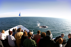 gI_58846_Blue Whale wBoat Photo