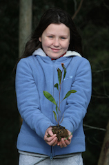 Celebrate Otway Tree Week from 26 July to 3 August 2014
