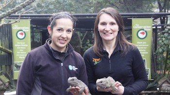 Nicky Busst and Nicole Kunzmann with Kiwi Birdlife Park resident tuataras Rex and Tane
