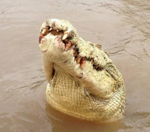Supplied- Adelaide River Queen Jumping Crocodile Cruises