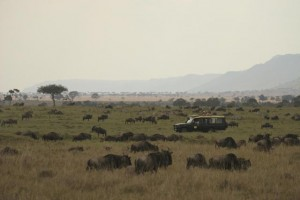 East Africa; Game Viewing