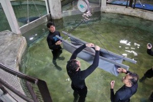 img-3-aquarists-measure-body-length-and-weight-of-baby-manatee-canola