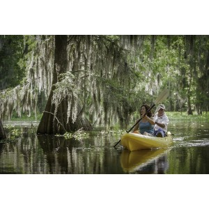 Connie Castille and Ken Grissom paddle through cypress trees in Lake Martin. Located in St. Martin Parish Lake Martin contains the Nature Conservancy's Cypress Island Preserve which is one of the largest wading bird rookeries in North America.