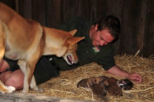 dingo puppies mum Adina and Tim Faulkner
