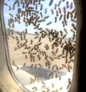Bees on plane window