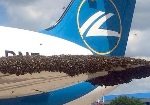 Bees swarm of plane at Moscow Airport