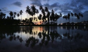 Palm trees reflecting in pool at sunset