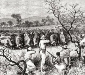 Buffalo hunting in Central Africa in the 19th century
