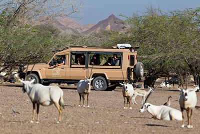 Sir Bani Yas Island's award-winning sustainability credentials are provi...