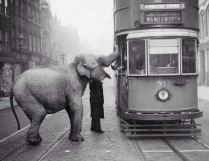 Tram stops in London to feed elephant
