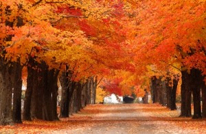 Fall_Color_Harrison