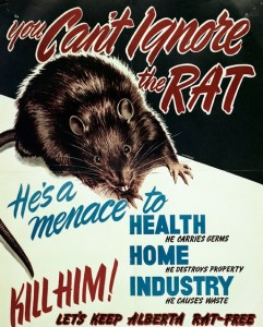 Same animal; different country. 1940s anti-rat poster produced by Canada
