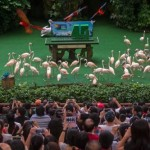 jbp45-2000-strong-crowd-during-birthday-edition-of-high-flyers-show-with-flamingos-pelicans-macaws