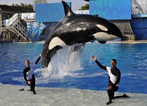 SeaWorld orca show in the US
