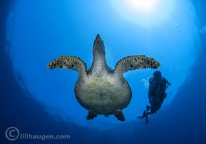 2 Photo Credit Lill Haugen Centara Maldives Diving