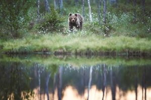 Evergreen Tours_Bear in the Rockies_Canada_LR