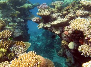 Perception is everything when it comes to Great Barrier Reef tourism. Wikimedia Commons