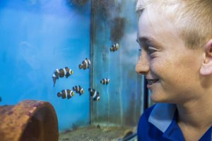 Reef Guardians and Clownfish Breeding program, Belgian Gardens State School, Townsville