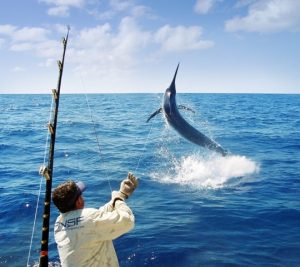 Far North Sports Fishing Marlin