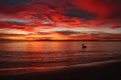 Shutterfest 2016 winner -People's Choice - Tammy Bulley - Sunset at Fly Point Beach Nelson Bay
