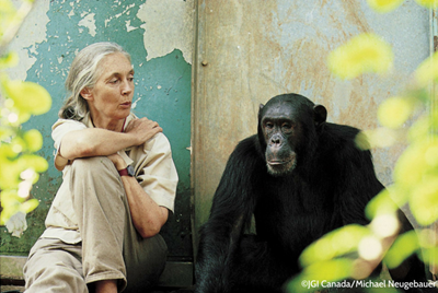 jane-goodall-chimps-please-credit-michael-neugebauer