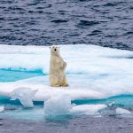roger-pimenta-polar-bear-on-ice-seen-from-the-ship-5863