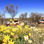 4wd-tour-with-desert-flowers