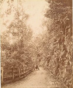 horse-and-cart-in-the-bulli-pass-before-it-was-paved-source-state-library-of-new-south-wales
