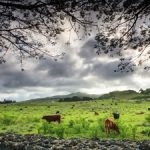500px Photo ID: 113572957 - Ranchlands in the village of Hana on Maui's east coast.